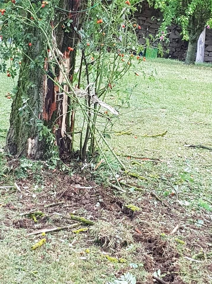 drvo2